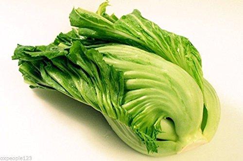 100 Chinese Indian Mustard (Gai choy, Gai choi) Cabbage Seeds