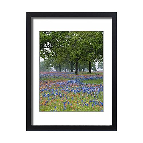 Media Storehouse Framed 24x18 Print of Texas, Texas Hill Country, Texas Paintbrush and Bluebonnets (5788472) Adams Field Frame