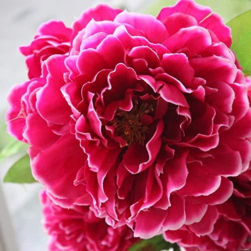 BIG-DEAL Bulb Flower_1PC Peony Flower Bonsai Bulbs for Garden Nature Perennial Balcony jardineria Decoracion Balcony Decora o para casa - (Color:5)
