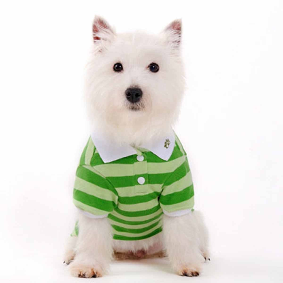 DOGO PuppyPAWer Stripe Dog Polo (Small, Green) by DOGO