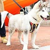 Adjustable Dog Safety Vest Harnesses, Mugenter Outdoor Walking Safety Chest Straps, Vest Harness with Car Seat Belt Restraint Lead for Extra-Large Dogs