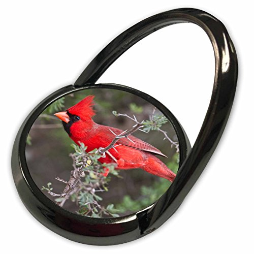 Larry Bird Cover - 3dRose Danita Delimont - Birds - Northern Cardinal adult male bird in brushy cover - US44 LDI0716 - Larry Ditto - Phone Ring (phr_146842_1)