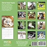 2020 Siberian Husky Puppies Wall Calendar by Bright Day, 16 Month 12 x 12 Inch, Cute Dogs Puppy Animals Chukcha Canine 7