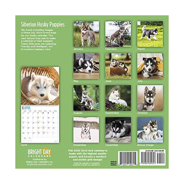 2020 Siberian Husky Puppies Wall Calendar by Bright Day, 16 Month 12 x 12 Inch, Cute Dogs Puppy Animals Chukcha Canine 2