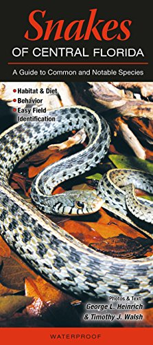 Snakes of Central Florida: A Guide to Common - Snakes In Florida