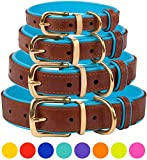 "CollarDirect Leather Dog Collar Brass Buckle Soft Padded Puppy Small Medium Large Red Pink Blue Green Purple Yellow (Neck Fit 19""-21"", Sky Blue)"