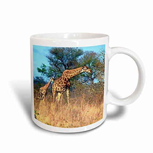 - 3dRose 132084_2 Cape Giraffe, Kruger National Park, South Africa Mug, 15 oz, Ceramic
