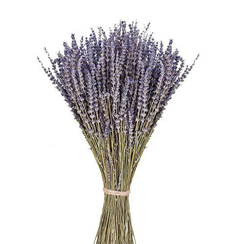 June Fox Dried Lavender