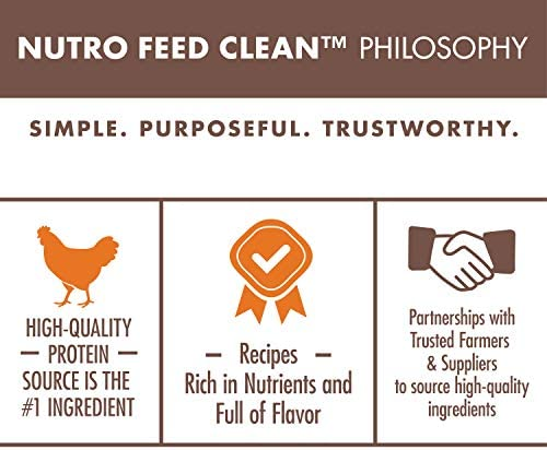 Nutro Wholesome Essentials Indoor and Sensitive Digestion Dry Cat Food, Chicken 6