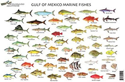 Sport Fish of the Gulf Coast /& Florida