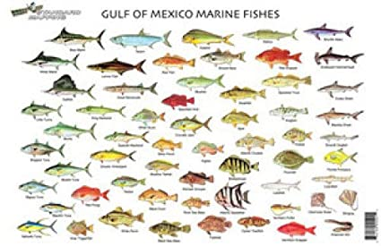 Amazon com standard map standard fish chart gulf of mexico md