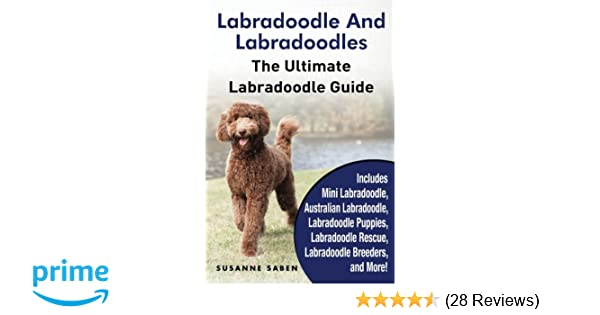 Labradoodle And Labradoodles The Ultimate Labradoodle Guide