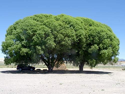 Amazon.com: 7 maravillas del mundo de la sauce – 7 árboles ...