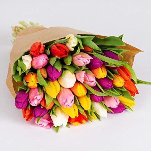 30er Bund Pflanzen K/ölle Tulpen einfachbl/ühend bunt