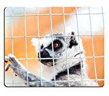 Luxlady Natural Rubber Mousepads IMAGE ID 21394591 Portrait of a lemur behind bars locked up a day