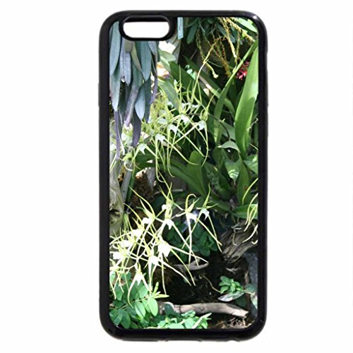 iPhone 6S / iPhone 6 Case (Black) Exotic flowers at the pyramids 01