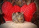 Sweetheart Daisy the Cat Kitty Baby Kitten Valentine Red Heart Pillows Original Fine Art Photography Wall Art Photo Print