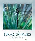 Dragonflies, Nicole Helget, 1583415416