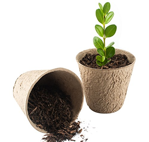 3-inch Peat Pots Pack of 50 | Seed Starter Pots | 30 Free Plant Markers | Biodegradable Peat Pots for Seedlings | No Transplant Shock with Seedling Starter Pots ()