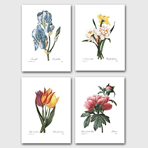 Set of 4 Botanical Art Prints, Redoute F - Lithograph Iris Shopping Results