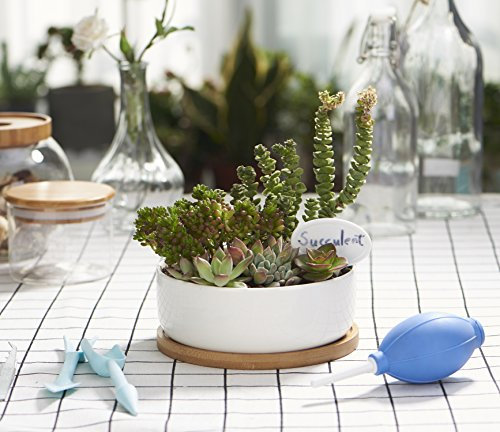 Planter Pot Indoor, Flowerplus 6.3 Inch Medium White Ceramic Round Succulent Cactus Flower Plant Holder Bowl with Bamboo Tray and Little Plants Sign for Indoors Outdoor Home Garden Kitchen Decor
