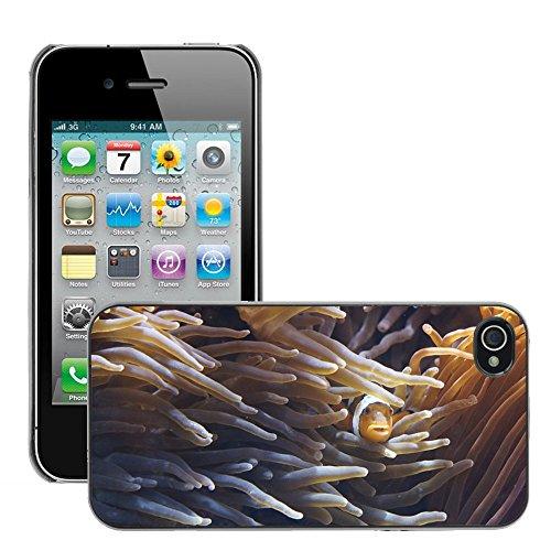 Bild Hart Handy Schwarz Schutz Case Cover Schale Etui // M00135782 Anemonen Tentacle Seeanemonen // Apple iPhone 4 4S 4G