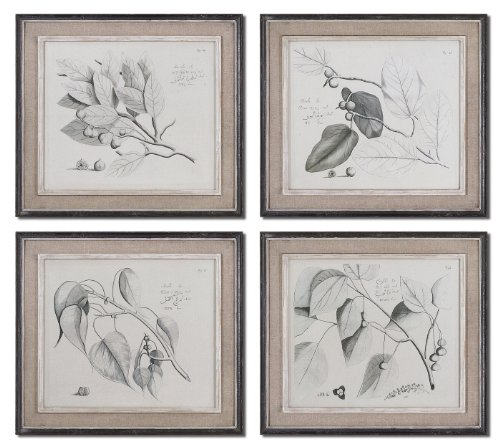 Multi Sepia Leaf Study Set Of 4 Wall Art by Uttermost