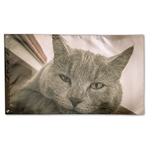 Colby Keats Cute Gray Cat Front View Face