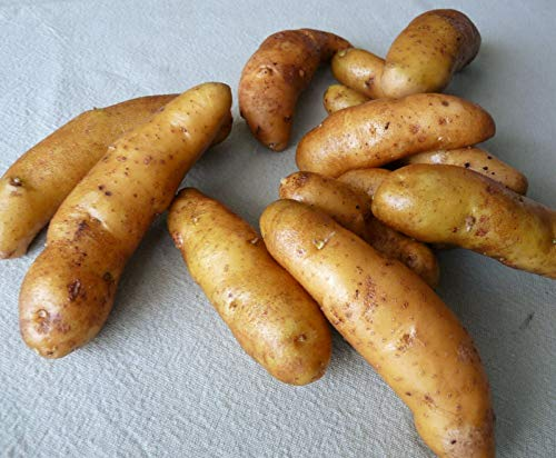 Details About 1 lb. La Ratte Fingerling Seed Potatoes/Spring Shipping Organic & Non GMO