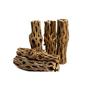 "5 Pieces 5-6"" Long Natural Cholla Wood for Aquarium Decoration by NilocG Aquatics 106"