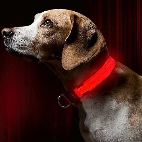 Bseen Led Dog Collar  Usb Rechargeable Light Up Safety Pet Collar With 3 Glowing Modes   3 Reflective Strings  Adjustable Soft Nylon Webbing  Great For Small Medium Large Dogs  Small  Bright Orange