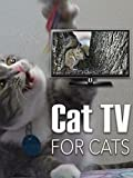 Cat TV - For Cats