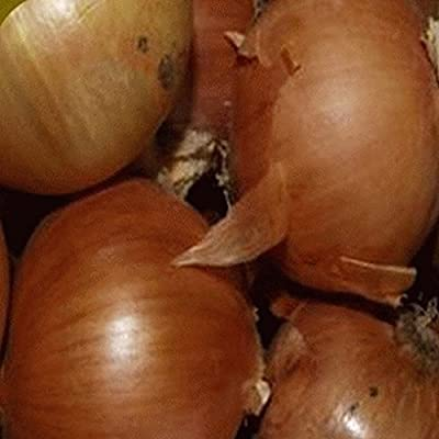 Everwilde Farms - Yellow Sweet Spanish Onion Seeds - Gold Vault