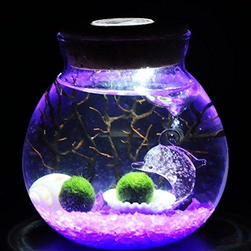 OMEM Valentine gifts for kids algae moss balls seed Glass jar Aquarium terrarium Kit (Two year old, purple)