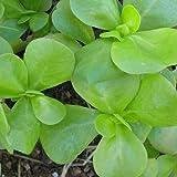 Golden Purslane Seeds