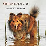Shetland Sheepdogs Calendar - 2016 Wall calendars - Dog Calendars - Monthly Wall Calendar by Magnum