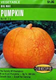 Pumpkin Big Max Seeds 20 Seeds