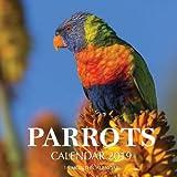 Parrots Calendar 2019: 16 Month Calendar