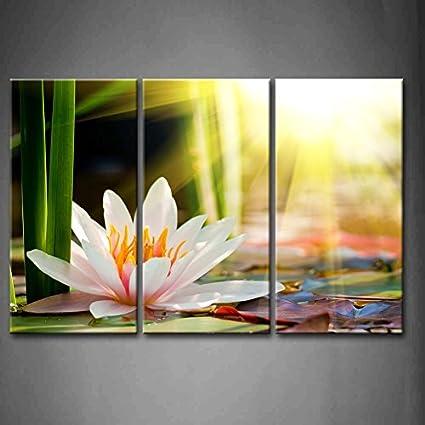 Amazon.com: 3 Panel Wall Art Beautiful Water Lily Sunshine Painting ...