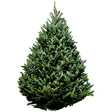 hallmark real christmas tree fraser fir 6 foot to 7 foot fresh cut - Pre Decorated Christmas Trees Delivered