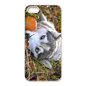 Alaskan Malamute Hight Quality Plastic Case for Iphone 5s