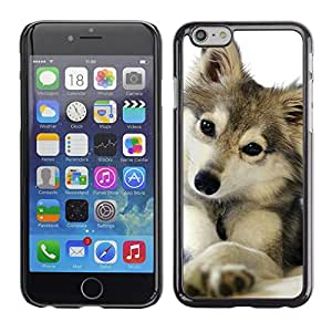 Plastic Shell Protective Case Cover || Apple iPhone 6 Plus 5.5 || Wolf Snow Winter Pet Canine @XPTECH