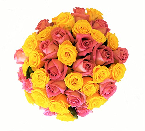 50 Farm Fresh Yellow and Pink Roses Bouquet By JustFreshRoses | Long (50 Rose)