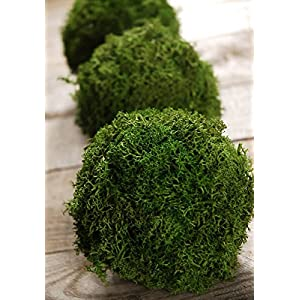 "Green Reindeer Moss 4"" Balls (Set of 3) - Excellent Home Decor - Indoor & Outdoor 53"