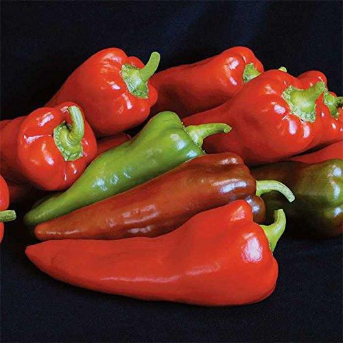 500 Seeds of Carmen Hybrid Pepper - Capsicum Annuum