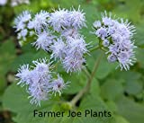 "BLUE MIST FLOWER - WILD AGERATUM - BLUE - 2 PLANTS 3"" POTS - ZONE 5 - 9"