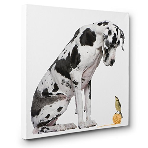 Great Dane Bird CANVAS Wall Art Home Nursery Décor by Paper Blast