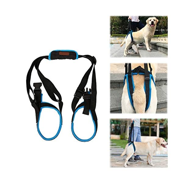Tineer Dog Lift Harness for Back Legs Pet Support Harness Rear Sling Help Weak Legs Stand Up Support Balance Harness for… Click on image for further info.