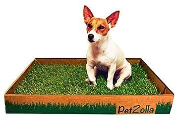 Petzolla – Cama para animales ecológica de césped real: Amazon.es: Jardín