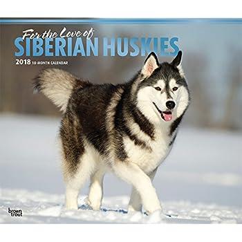 Amazon Com The Dog Wall Calendar 2018 Siberian Husky Office Products